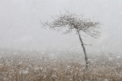Snow showers, Moor Farm, Kirkby (neil smith2010) Tags: snow showers blizzaed flurry woodland lincolnshire white cold landscape