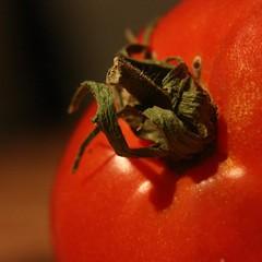 Tomato (Man-o-Photo) Tags: closeup macro tomato red