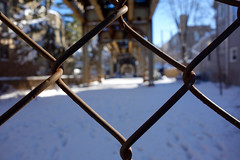 can't see the forest, dude (KevinIrvineChi) Tags: chicago chicagoist curbedchicago boingboing snow sony dscrx100 snowy snowcovered sunny chainlinkfence chainlink rusty el l elevatedtrain tracks trees white brown yellow blue sky leaves dusted winter 2018 macro close up bokeh dof depth field outdoors outside rail columns focus shadow lakeview illinois cook county