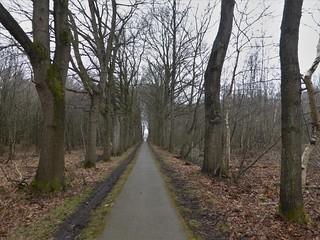 Staight on into the woods at Ketliker skar