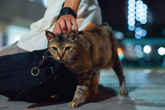 DSC04512 (hackdragon) Tags: stray domestic cat feline animal bokeh low light sony a7r ii gm 2470 round fierce angry sexy pussy male female singapore sg pets cute adorable lovely aggressive little one watch bag