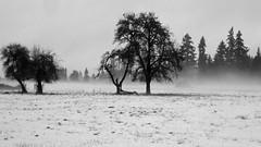 Your Choice (B&W) (Eclectic Jack) Tags: tree sky field snow black white landscape grass bird mist fog state washington blackwhite 7dwf jackfx explore
