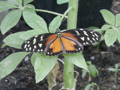 P4190155 (Steve Guess) Tags: horniman museum butterfly forest hill london england gb uk