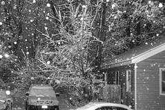 Nighttime Snow Fall Images: B&W (Adventure George) Tags: acdseephotostudio albany beauty blackwhite blackandwhite city citystreet flora frontyard frozen hdr highdynamicrangeimage march marchsnow monochrome monochromephotography naturalworld nature newyorkstate newyorkstatecapital nikond750 northamerica outdoor photogeorge photoshoot photomatixpro snow snowscene snowstorm trees unitedstates unitedstatesofamerica upstatenewyork urban urbancolor urbanscene us usa winter winterscene winterstorm newyork