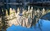 Merced River Reflections, Yosemite Falls (OJeffrey Photography) Tags: yosemitefalls yosemitenationalpark reflection mercedriver pano panorama nikon d850 waterfall river ojeffrey ojeffreyphotography jeffowens