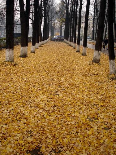 Осенняя аллея ©  ayampolsky