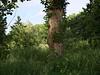 St-Thomas-Friedhof_e-m10_1005259933 (Torben*) Tags: rawtherapee olympusomdem10 olympusm25mmf18 berlin neukoelln sanktthomasfriedhof baum tree stamm trunk