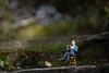 A student of Nature (hehaden) Tags: model man miniature resin reading sitting stool wooden step garden bordehill haywardsheath sussex