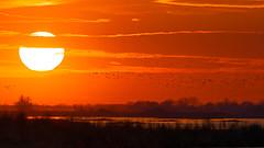 Sunset On the Platte (paulv2c) Tags: nebraska sandhillcrane crane nature spring march wildwildlife bird outdoorsun orange paulvitucciphotography river sun sunset clouds evening flight migration