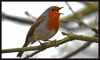 singing friend