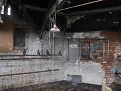 Abandoned to the pigeons (Lluniau Clog) Tags: week152018 52weeksin2018 week15theme urbex abandonded forgotten frozenintime urbanexploration