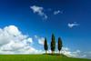 In Memoriam (DSC7362) (DJOBurton) Tags: tuscany italy spring toscana primavera valdorcia siena cretesenesi sanquiricodorcia torrenieri cypress