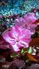 Die Farben im April (gabimartina) Tags: frühling blüten blumen brandenburg farbe spring