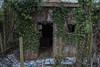 Ivy (tbolt-photography.com) Tags: derelict derp derelictplaces derelictbuildings decay abandoned abandonedplaces abandonedbuildings urbex urbandecay nikon