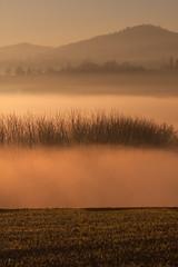 . (bluestardrop - Andrea Mucelli) Tags: nebbia bruma haze mist fog gold sunrise alba piemonte piedmont italia italy