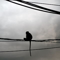 P1020300 (pierre blct) Tags: monkey singe monochrome shadow asia asie bali indonesia travel traveling