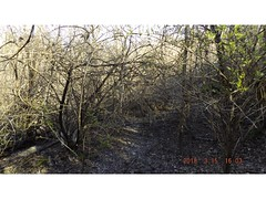 DSCF0906 (kevinredden1) Tags: hikes streambed hidden