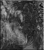 Maraña (seguicollar) Tags: imagencreativa photomanipulación art arte artecreativo artedigital virginiaseguí abstracción abstracto maraña líneas blancoynegro
