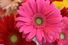 April 15: Pink Flower