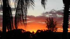 Bradenton Sunrise (Jim Mullhaupt) Tags: sunrise sunup dawn sun morning sky clouds color red orange pink yellow blue tree palm silhouette weather tropical exotic wallpaper landscape bradenton florida manateecounty nikon coolpix p900 jimmullhaupt photo flickr geographic picture pictures camera snapshot photography nikoncoolpixp900 nikonp900 coolpixp900