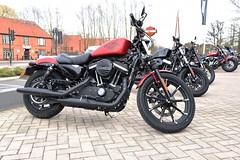 DSC_8946 Harley-Davidson (PeaTJay) Tags: nikon american usa classic sports racing motorcycles bikes reading berkshire harleydavidson