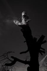 Slight Light (pni) Tags: sky tree trunk light monochrome karis karjaa finland suomi pekkanikrus skrubu pni