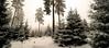 WORLD OF D´NI (PetschoX5) Tags: petscho freedomstreaming photography fotografie deutschland germany cyansworld d´ni atrusandcatherine atrus catherine yessha cyan myst canon 700d snow whitesnow tannenbaum tannenbäume forest weisserschnee bäume wälder