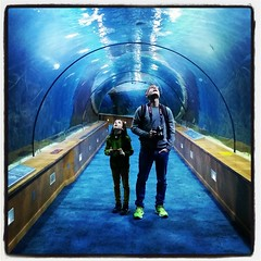 underwater (Maluni) Tags: valencia spagna espana spain acquario water acqua acquarium waterpark park