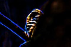 The Woodpecker at Work (Astral Will) Tags: bird woodpecker downywoodpecker feeding fractalius altered hss sliderssunday