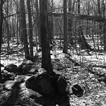 Late Winter Walk in the Palisades thumbnail