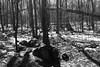 Late Winter Walk in the Palisades (Zach K) Tags: winter shadows trees bw black white palisades thepalidsades new jersey path walking hike trail nj fujifilm fuji x100f acros forest