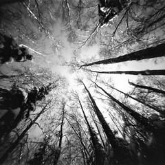 crown (Foide) Tags: treecrowns snow winter pinhole f160 sky pinholetree