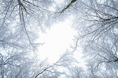 Sky view in the forest, Norway (KronaPhoto) Tags: 2015 natur forest skog nature norway trees skyview sky himmel wintermood winter vinter pattern coldseason snø snow