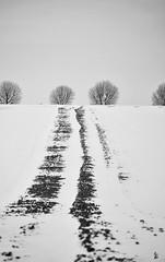 _DSC1577 -Sous la neige (Le To) Tags: nikond5000 noiretblanc nerosubianco bw monochrome nature arbres neige froid hiver