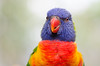 What you're looking at ? (Rene Mensen) Tags: bird color colorful rene macro mensen d5100 drenthe dierentuin dierenpark emmen vogel