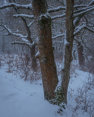 Greenham Common - X (J R Oliver) Tags: bbowt berkshire england greenhamcommon snow winter
