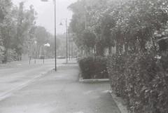 Via Luci Del Varieta (1950) (goodfella2459) Tags: nikon f4 fomapan retropan 320 35mm blackandwhite film analog rimini italy via luci del varieta 1950 street road hedges trees alberto lattuada federico fellini giulietta masina cinema bwfp