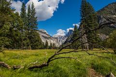 Yosemite.Village.2600p.255 (l.dardennes) Tags: yosemite yosemitenationalpark california usa canoneos7dmarkii sigma1750mmf28 étatsunis us