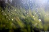 Waterdrops (Viictor B) Tags: drop drops waterdrops garden tree trees leaf leaves sun sunset sunrise sunshine lens macro photography beautiful details gorgeous light exposure