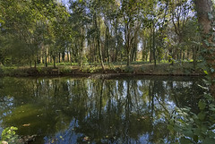 Reflections of the Charente in autumn-2 (jonathan charles photo) Tags: charente river france autumn trees reflection landscape art photo jonathan charles