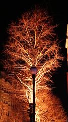 2018-02-24_21-16-07_ILCE-6500_DSC08114 (miguel.discart) Tags: 2018 63mm belgie belgique belgium brightbrussels brightbrussels2018 bru brussels bruxelles bxl bxlove epz18200mmf3563oss focallength63mm focallengthin35mmformat63mm highiso ilce6500 iso6400 night noche nuit photoderue photography sony sonyilce6500 sonyilce6500epz18200mmf3563oss street streetphotography