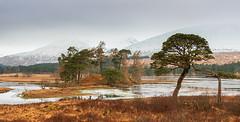 Kissing Trees (Geoff France) Tags: loch lochtulla lake mere landscape scottishlandscape trees water ice inveroran bridgeoforchy