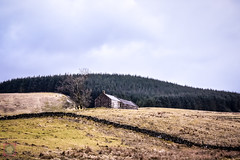 Drive to Fintry, Scotland (picsbyCaroline) Tags: forest pine sky scotland wood field house cottage old grass scenery hill mountain rugged drive view country nature wild rustic landscape