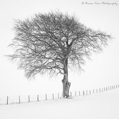 A Cold Winters Day (.Brian Kerr Photography.) Tags: cumbria beastfromtheeast snow winter photography landscapephotography tree landscape weather nature naturallandscape natural outdoor outdoorphotography opoty onlandscape sony a7rii formatthitech firecrest vanguarduk availablelight carlisle fenceline
