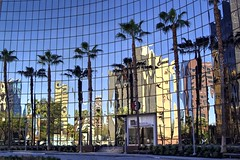 Distorted reality (PeterThoeny) Tags: sanjose california siliconvalley sanfranciscobay sanfranciscobayarea southbay 55almaden almadenboulevard reflection mirrorreflection distortion building glass glassbuilding clear day sky palmtree tree sony a6000 sigma sigma30mmf14 1xp raw photomatix hdr qualityhdr qualityhdrphotography fav200 architecture