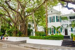 Banyan Baum (Markus Lenz) Tags: amerika banyan bauwerkegebã¤ude bã¤ume conchhouse diewelt erker florida floridakeys gebã¤udeteile haus holzhaus keywest laubbã¤ume orte orteallgemein pflanze pflanzen usa vereinigtestaaten wohngebã¤ude wohnhaus