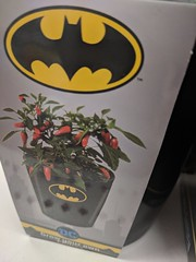 The Batman Pepper (earthdog) Tags: 2018 flower planter store shopping dccomics batman product target justiceleague logo googlepixel pixel androidapp moblog cameraphone