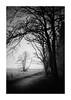 Holt Country Park 25 March 2018 (Matthew Dartford) Tags: infraredphotography bw matthewdartford blackandwhite branch fog foggy forest infrared ir landscape misty monochrome tree trees woodland woods