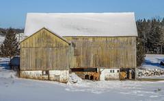 barn and horses winter.jpg (Ran Valentine) Tags: barn winterscene