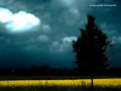 la pioggia (Ecinquantotto ( + 1.430.000 views !!! GRAZIE) Tags: acqua colori colors clouds alberi trees giallo dreams dream d3000 italia italy veneto nikon nuvole ombre vicenza